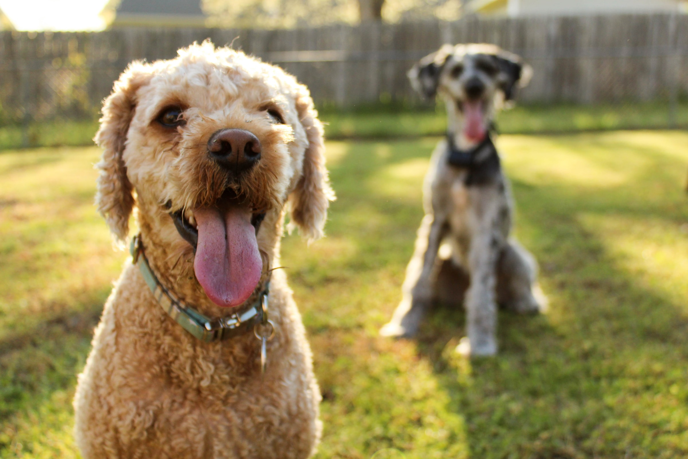 Signs Of Heartworm In Dog