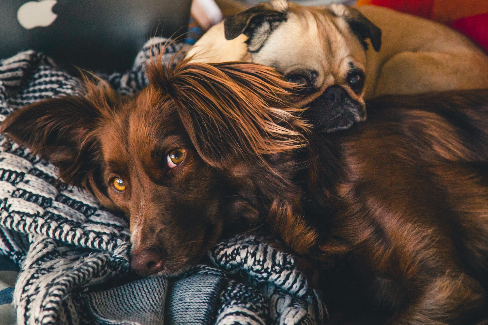 Best Heartworm Prevention For Dogs
